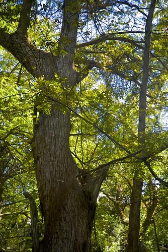 trees creek vines texas foliage cypress wimberley
