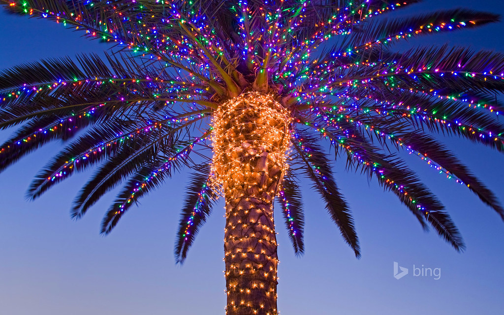 Christmas Lights In Palm Trees.Christmas Lights In A Palm Tree At A Winery Temecula Vall