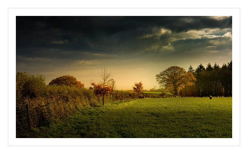 autumn trees england sky color green nature beautiful grass clouds rural forest canon golden glow shadows view sheep vibrant dean perspectives peaceful gloucestershire rays autumnal cloudscape treescape graze forestofdean canonef2470mmf4lisusm canon6d ericgoncalves ominoussky's