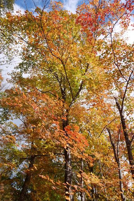 日, 2014-10-26 10:15 - Piermontあたりの紅葉