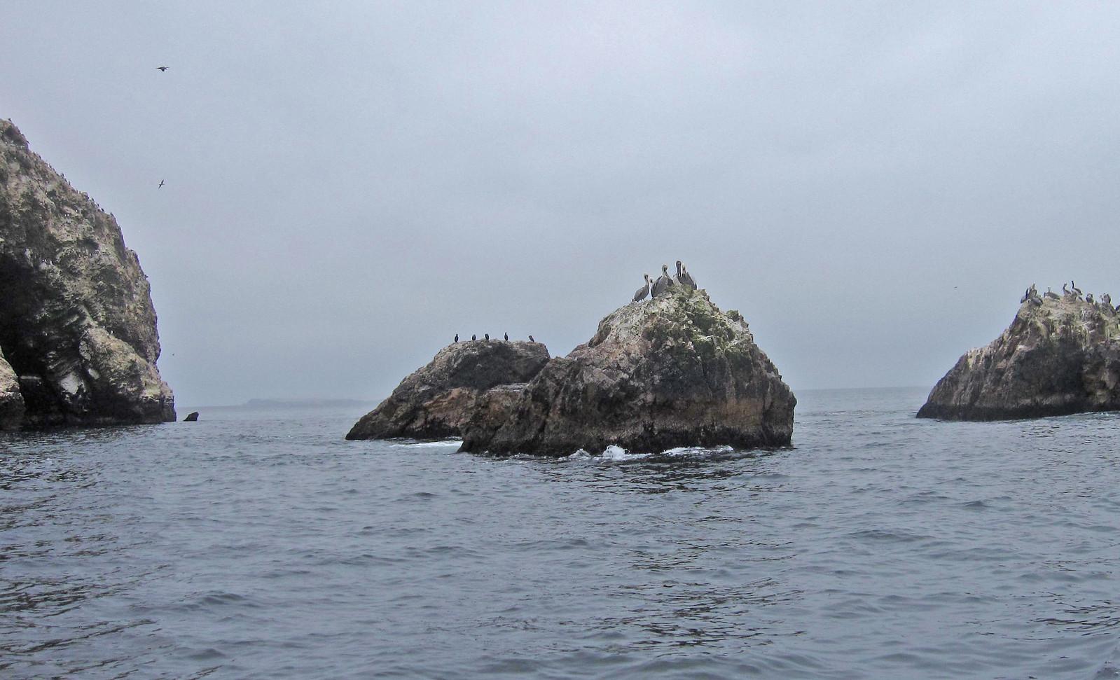 Islas Ballestas 124