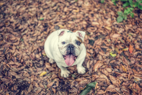 First autumn walk | by The 3 bulldogs