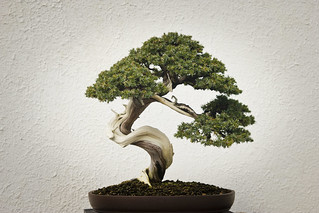 National Bonsai & Penjing Museum | by wnhsl