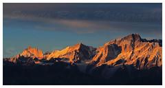Golden Himalaya
