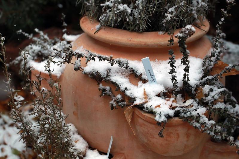 2014 12 15 - Herbs Snow - 9S3A4147