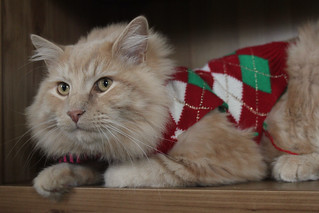 Portland: Simba in a Sweater at the Jerk Store | by eliduke