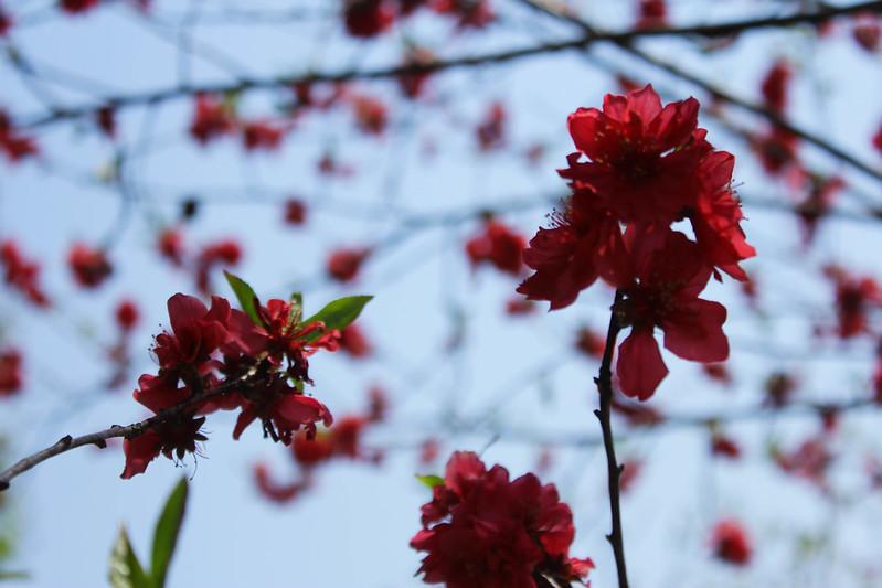2014-04-19_00346_美の山.jpg