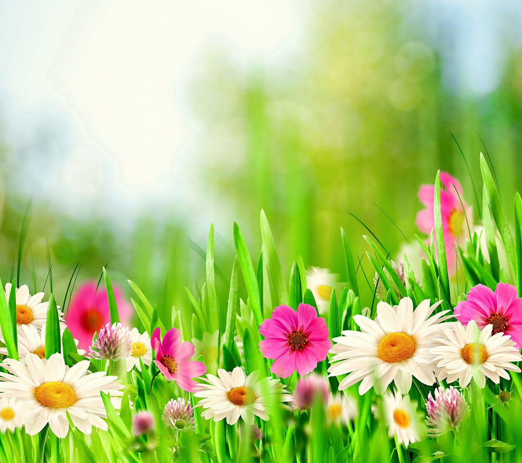 Spring-Meadow-HD-HD-Samsung-Galaxy-S5-Wallpapers-free-download