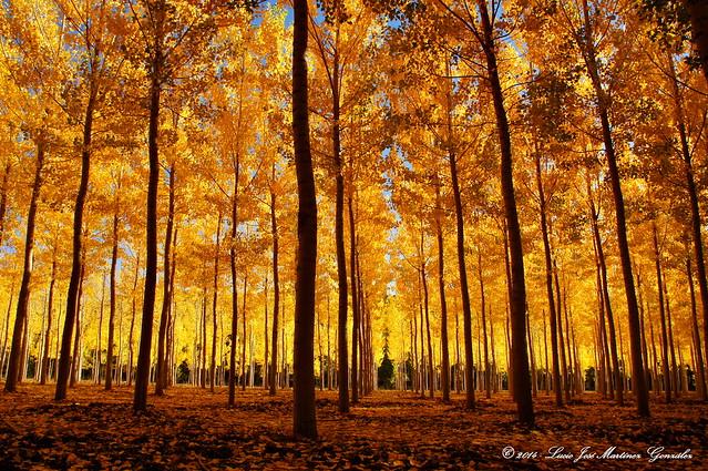 Near Cañete: Autumn Colours