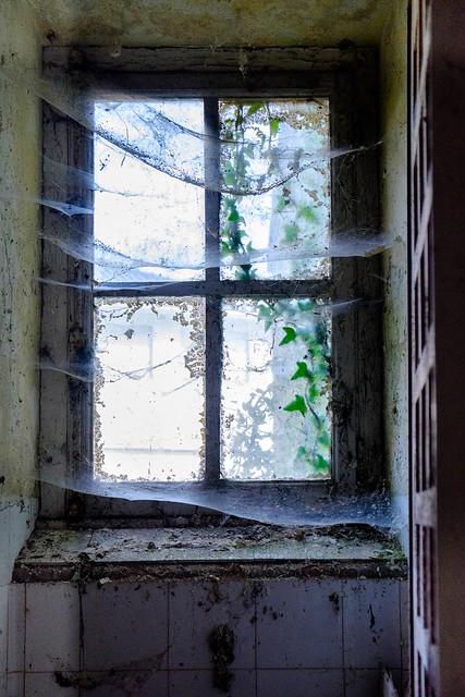 DSCF5428 ~  a natural webbed curtain...
