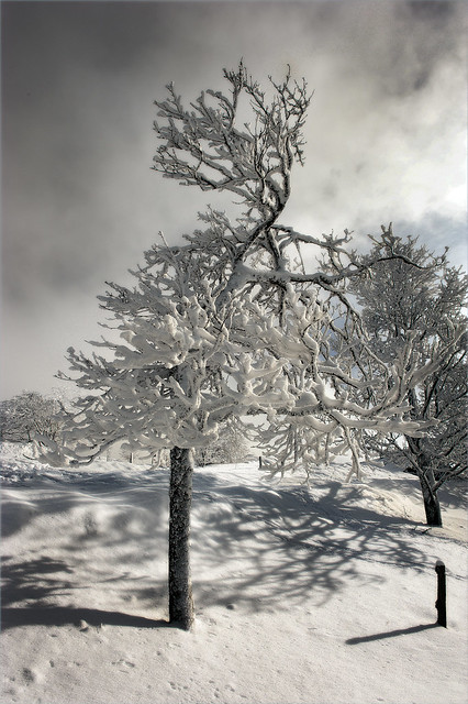 Swiss winter time. A tree covered with ice and snow. No. 3114.