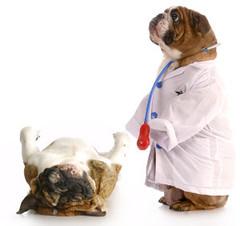 Legyen kisállatgyógyászati asszisztens!