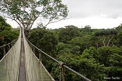 bridgeIS