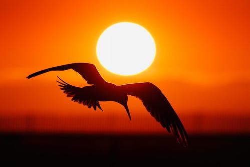 sunset orange bolsachica eleganttern salahbaazizibmsecanon7d400mm56