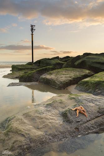 sea seascape canon landscape starfish haylingisland hampshire portsmouth jaketurner canon5dmarkiii jrturnerphotography