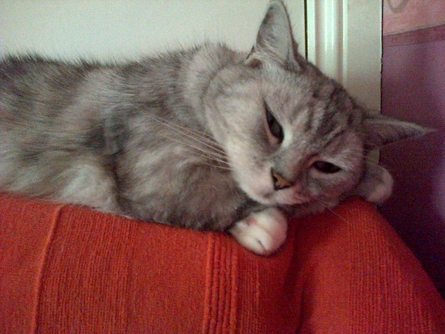 Tico sleeping again