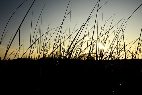 ocean morning light sunset beach grass silhouette sunrise reeds gold golden newjersey nikon glow shadows stripes nj nikkor wildwood lightandshadow nikonphotography nikond7200 saltydogphoto nikkor1680mmf284eedvr