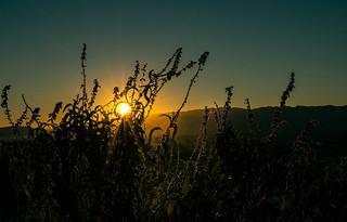 Desert Morning   by MarkCranstonPhoto.Com