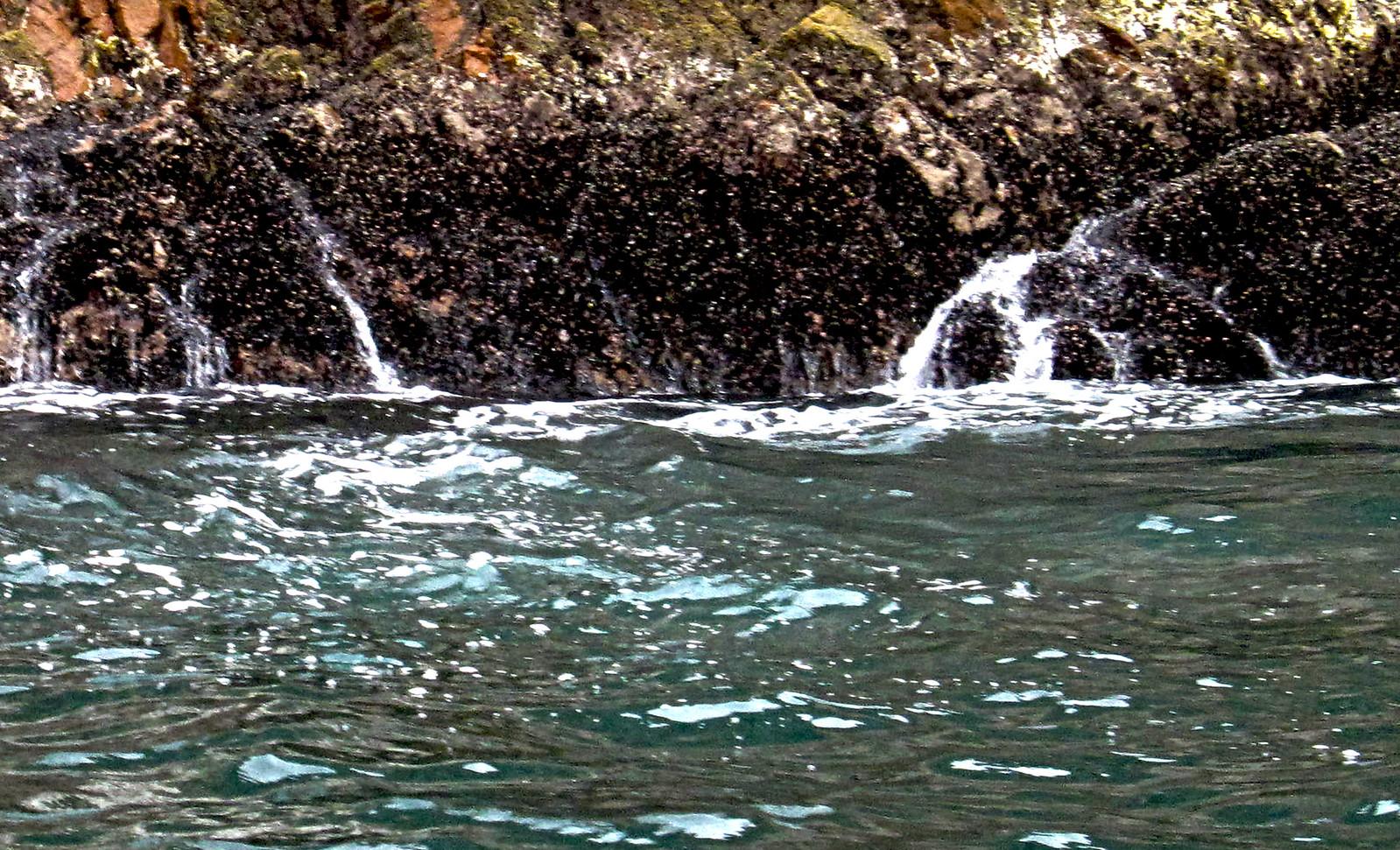 Islas Ballestas 65