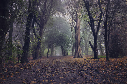 St Anne's Park on a foggy day. | by Fat_Fingers