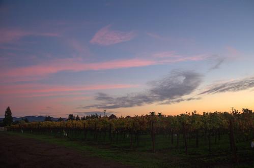 california autumn sunset winery yineyards