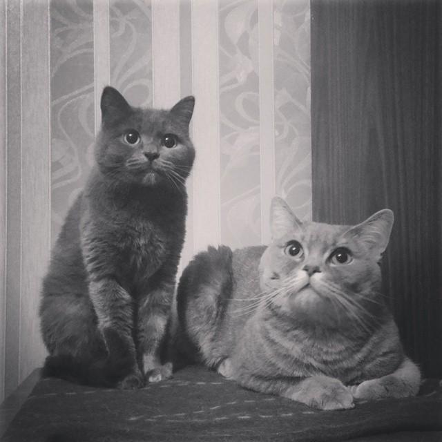 Kotyushki Cat Black White Kittie Bw Friend Love Flickr