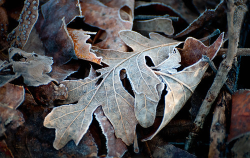 Fall Frost | by Sheila Newenham