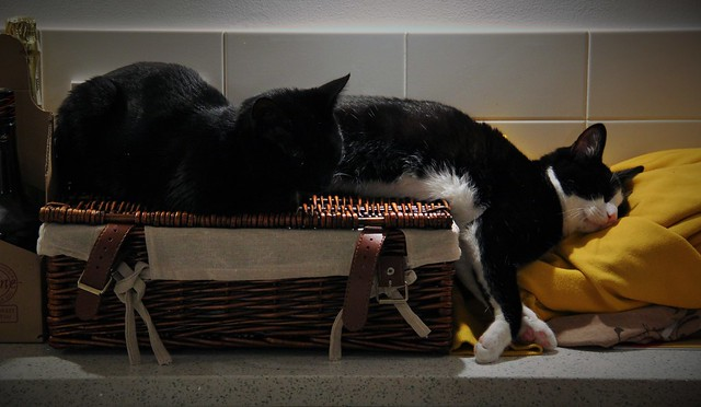Tuppence & Calypso - That can't be comfortable?...