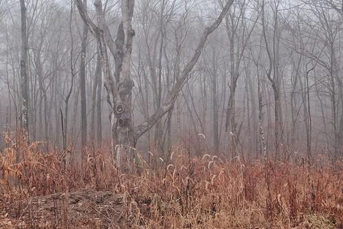 autumn trees winter landscape connecticut