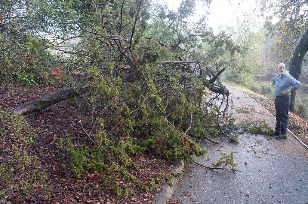 December storm clean-up