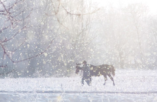 Man and horse in the snow | by branimir.juga