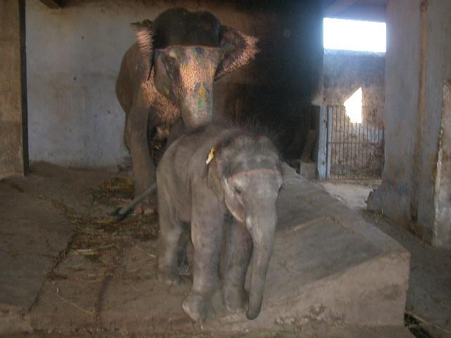 Elephant orphanage, Jaipur | Ellen Hau | Flickr