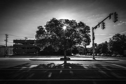 tree sunrise streetphotography