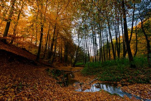 autumn art rain weather germany deutschland photo europe fuji photographer rainyday herbst 365 dusseldorf düsseldorf landschaft regen wetter selfie ratingen 365days 365project fujix100s