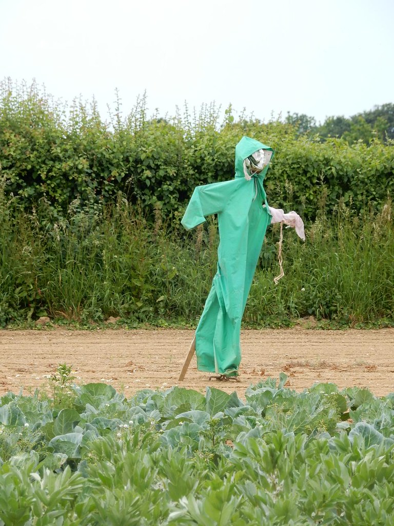 Scarecrow Southbourne to Chichester