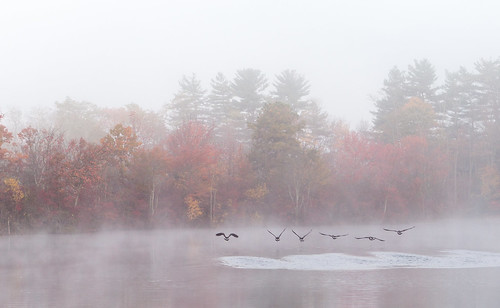 autumn mist fall water leaves fog landscape geese pond wildlife nj dallenbachlake