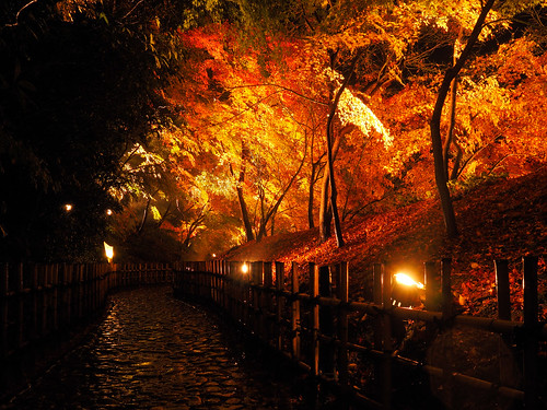 light japan night maple autumnleaves 日本 kagawa 栗林公園 kaede 楓 香川 ritsuringarden
