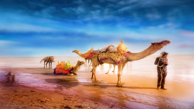 Camel riding at beach