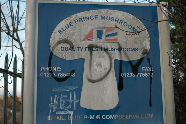 Blue Prince Mushrooms