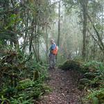 01 Viajfilos en Panama. Sendero Quetzal 11