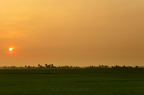 life morning trees light summer sky panorama orange sun tree green nature field grass sunrise landscape scenery flickr day colours paddy outdoor natur paddyfield leonlee28 leonlee