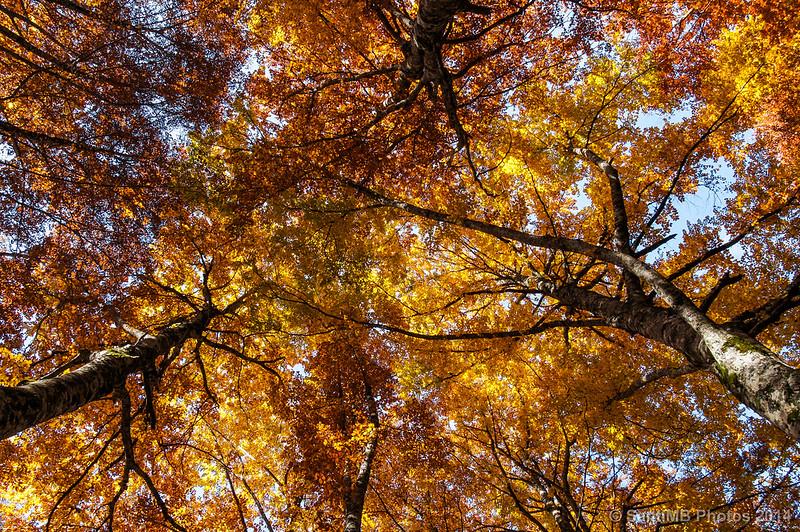 Cubierto de otoño