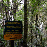 01 Viajfilos en Panama. Sendero Quetzal 34