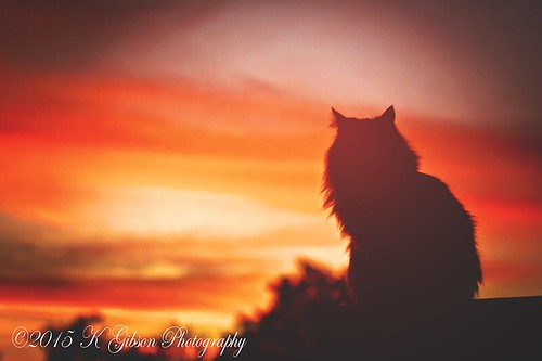 sunset arizona sky cat canon saturated feline 70200mm litchfieldparkkgibsonphotography
