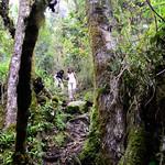 01 Viajfilos en Panama. Sendero Quetzal 55
