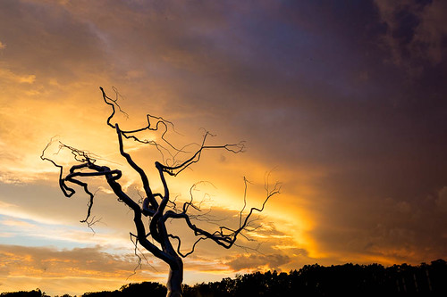 sky tree art metal museum unitedstates arkansas bentonville crystalbridges