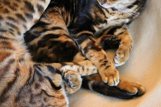 Whiskers & Paws: January 2015 Edition | by GourmetPens