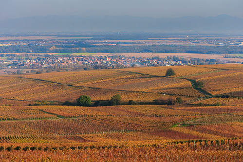 autumn panorama france golden vineyard village wine route valley alsace agriculture husserenleschateaux