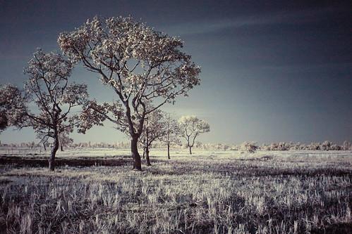 8 Tree processed FUJI | by Matt Jones (Krasang)