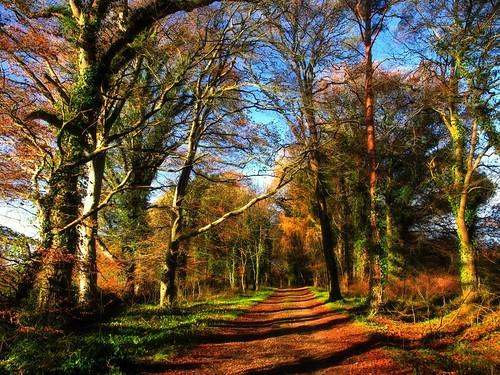 trees ireland irish woodland landscape countryside woods track shadows path walk cork kanturk hss kanturkcastle canong11 ilobsterit topazglow